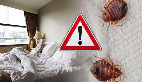 bed bugs travel edmonton