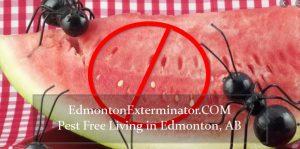 pest free edmonton